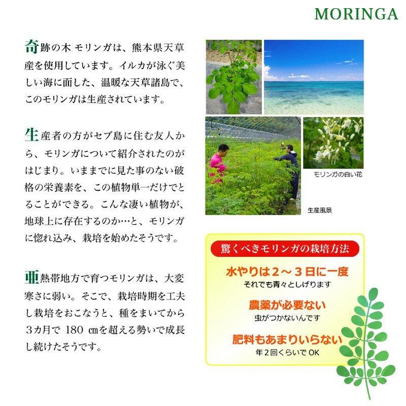 モリンガ2